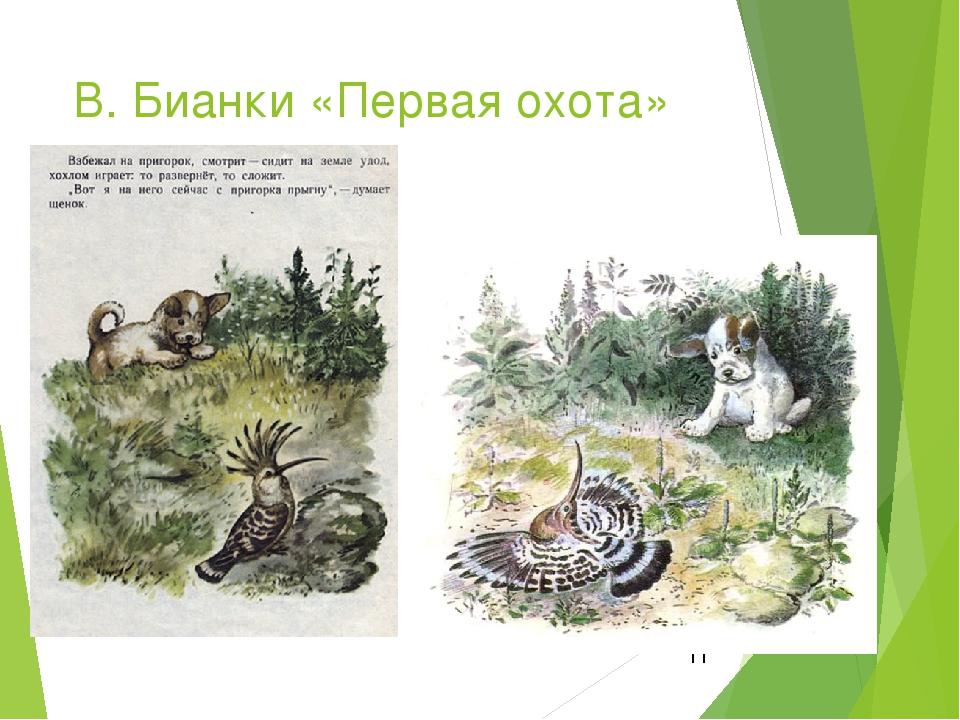В. Бианки «Первая охота»
