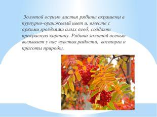 Золотой осенью листья рябины окрашены в пурпурно-оранжевый цвет и, вместе с