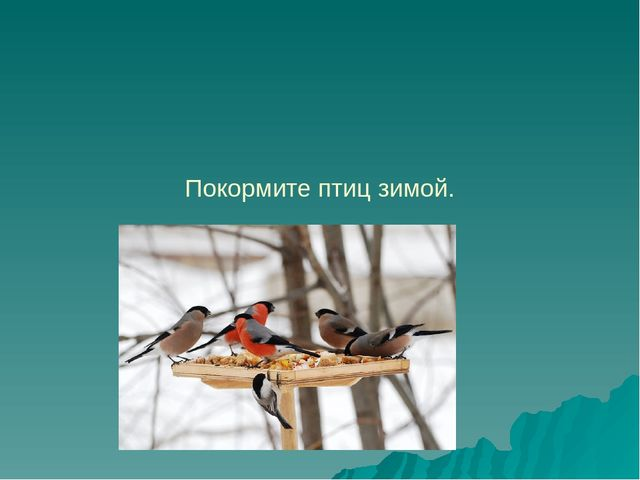 зимующие птицы курской области названия и фото