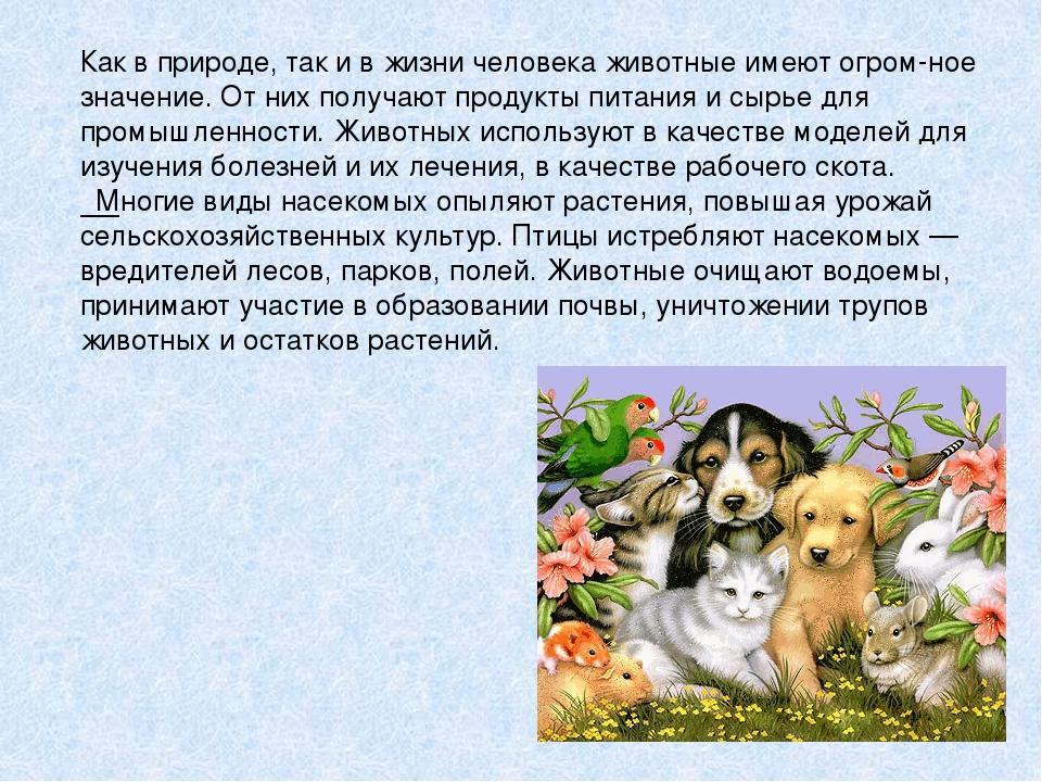 """Презентация по окружающему миру по теме """"Охрана животных"""" (3 класс)"""