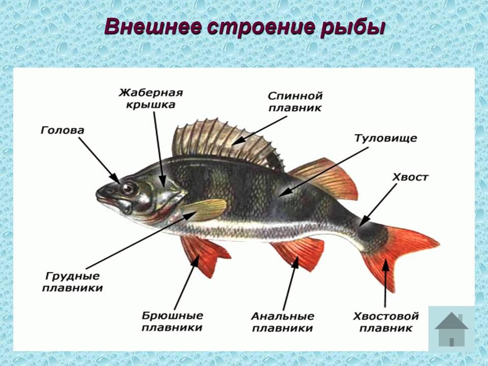 Конспект урока многообразие рыб 7 класс