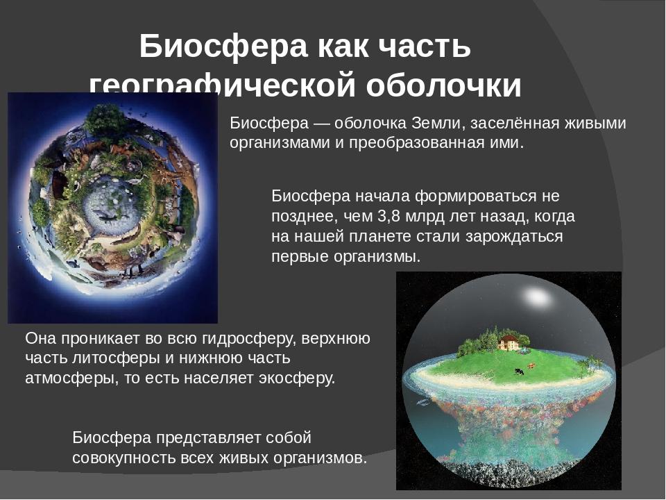 экосфера экологическая оболочка земли картинки наш век больших