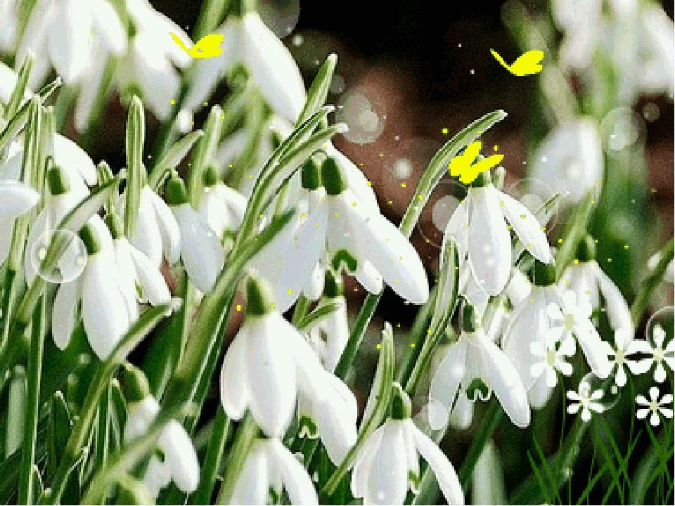 подснежники к 8 марта картинки гиф юргенс