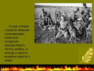 А еще собаки служили живыми талисманами, помогали солдатам преодолевать тяго
