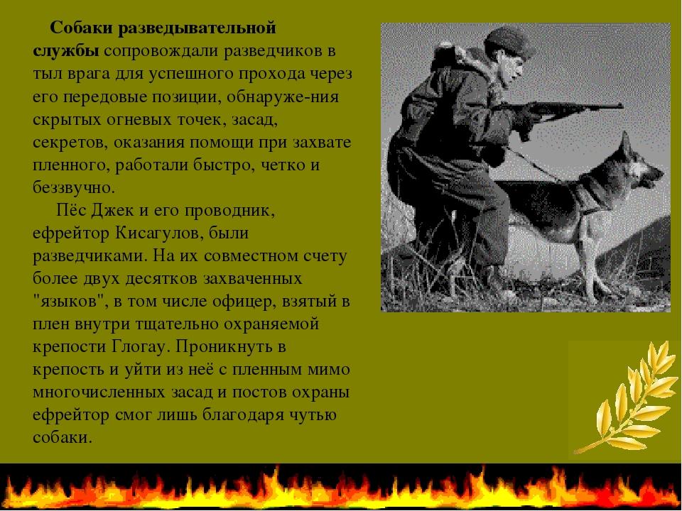 Собаки разведывательной службысопровождали разведчиков в тыл врага для успе...