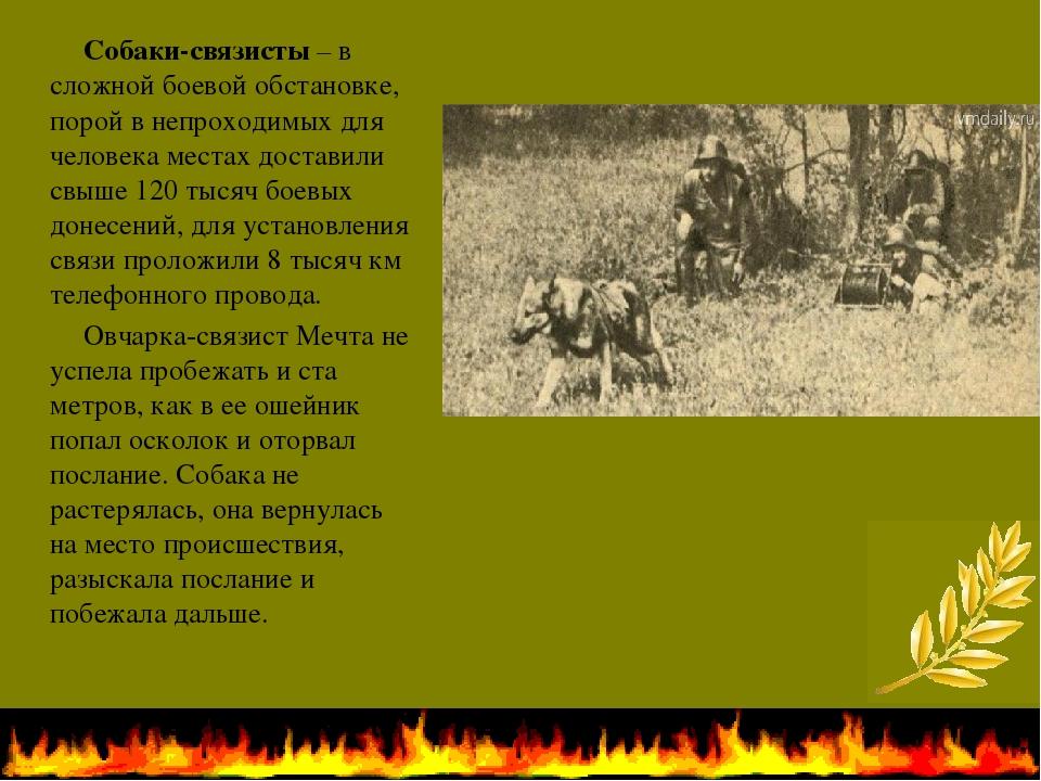 Собаки-связисты– в сложной боевой обстановке, порой в непроходимых для чело...