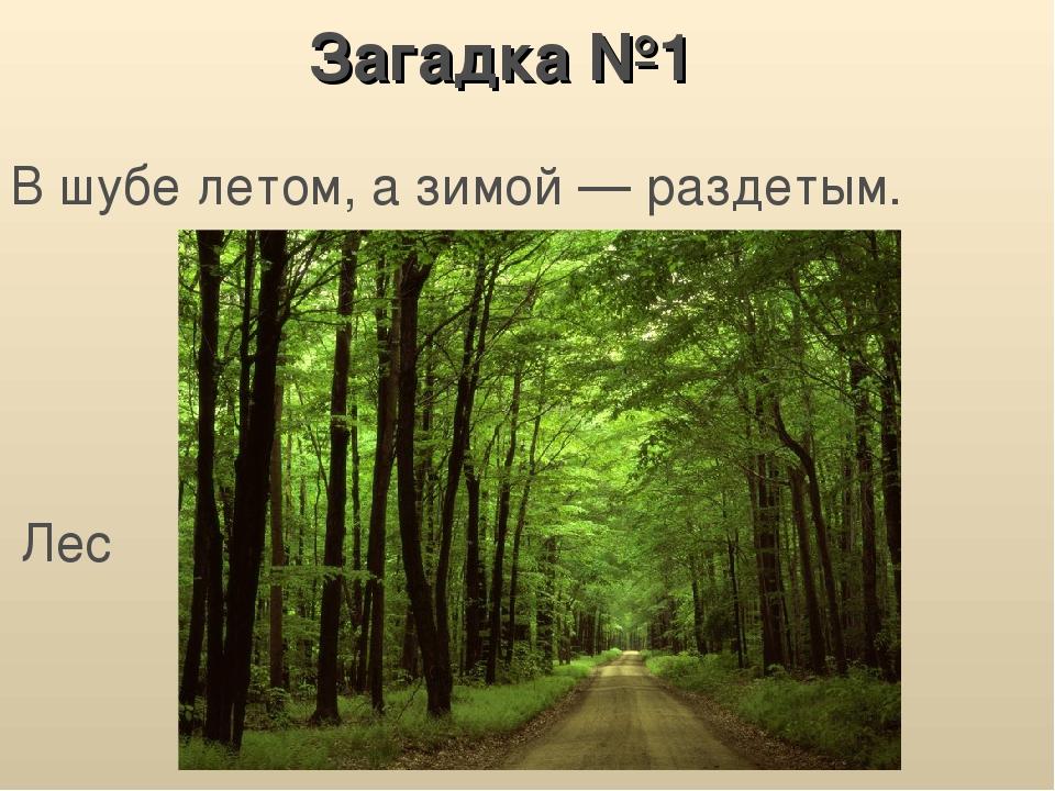 картинка загадка про лес бы
