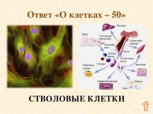 Ответ «О клетках – 50» СТВОЛОВЫЕ КЛЕТКИ