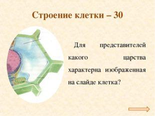 Строение клетки – 30 Для представителей какого царства характерна изображенна