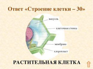 Ответ «Строение клетки – 30» РАСТИТЕЛЬНАЯ КЛЕТКА
