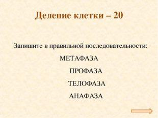 Деление клетки – 20 Запишите в правильной последовательности: МЕТАФАЗА ПРОФ