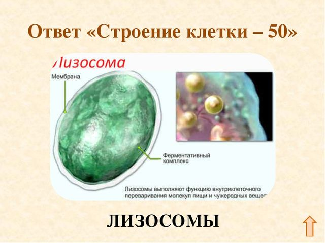 Ответ «Строение клетки – 50»