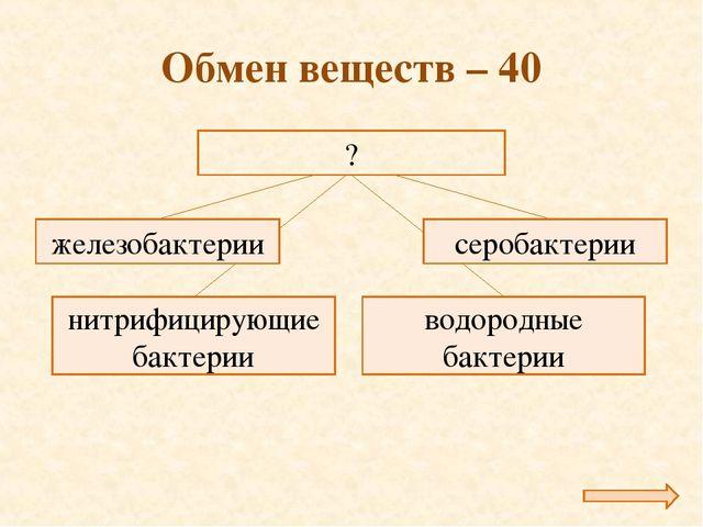 Обмен веществ – 40