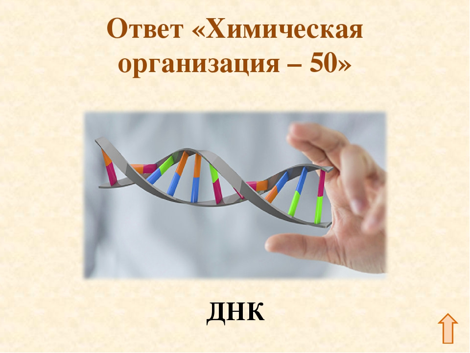 Ответ «Химическая организация – 50» ДНК
