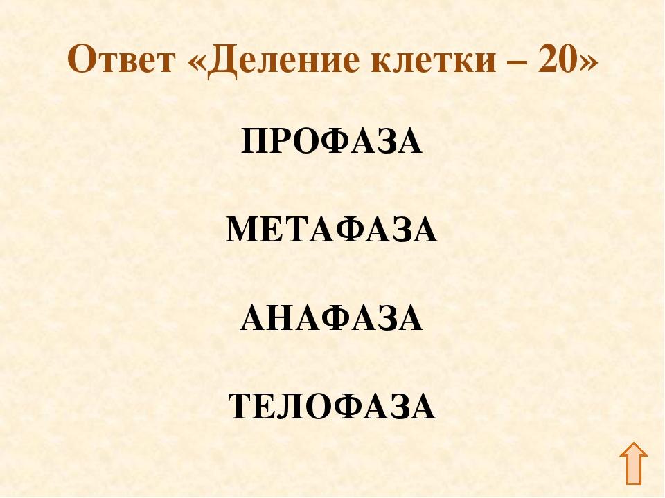 Ответ «Деление клетки – 20» ПРОФАЗА МЕТАФАЗА АНАФАЗА ТЕЛОФАЗА