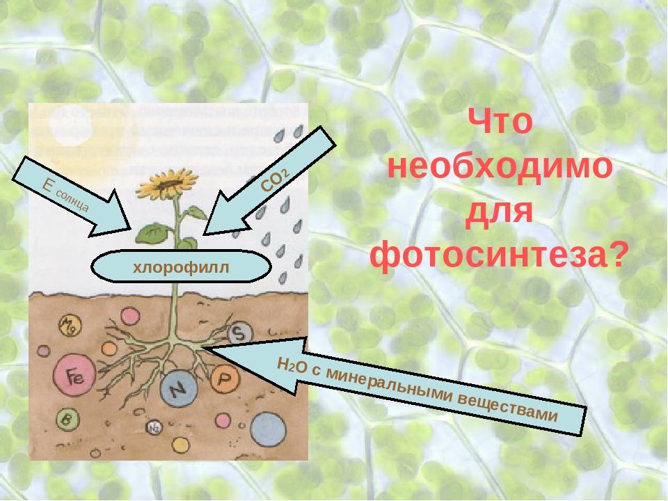 Фоторепортаж зарядье растения