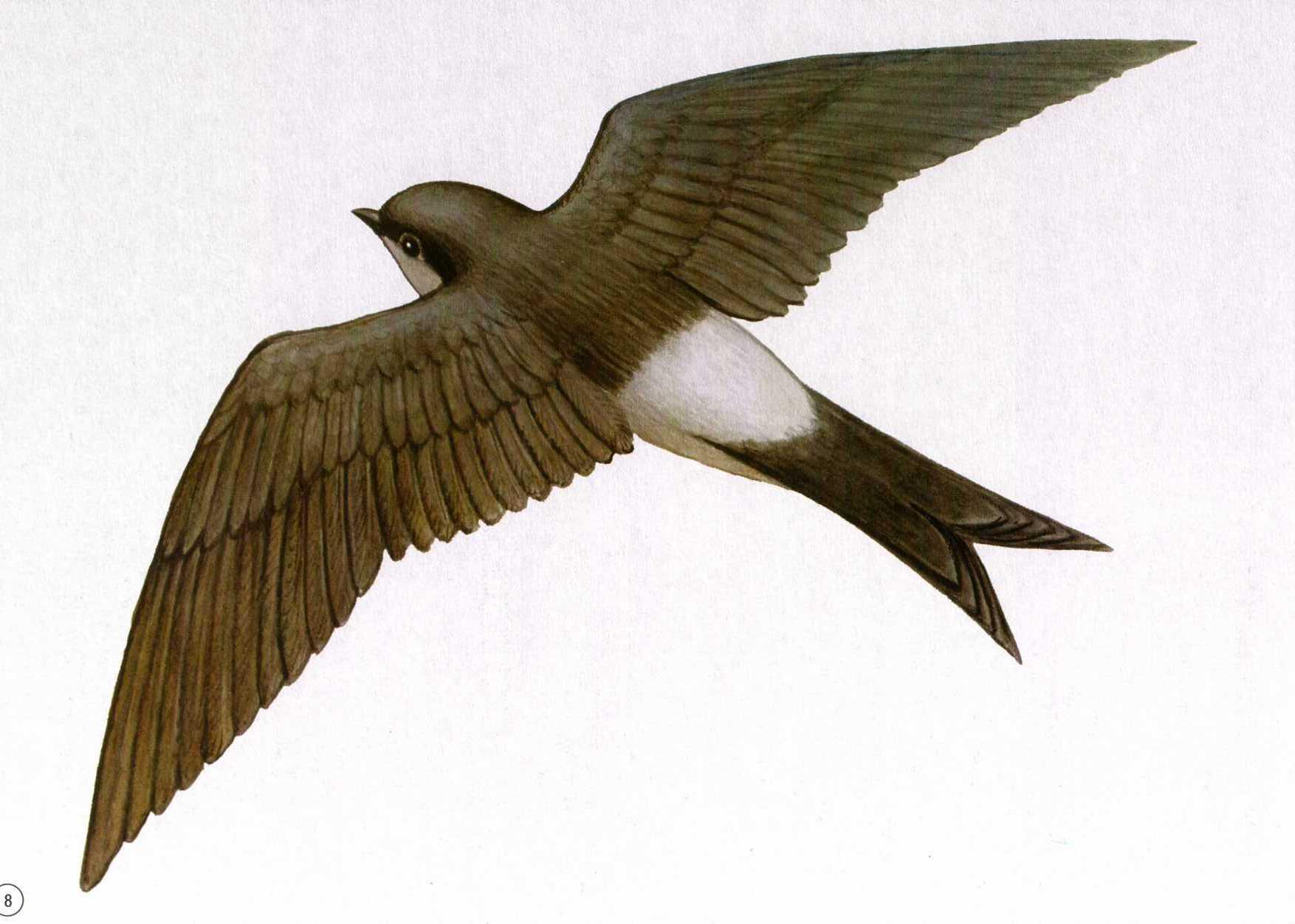 Картинки птица в полете для детей, картинки братва