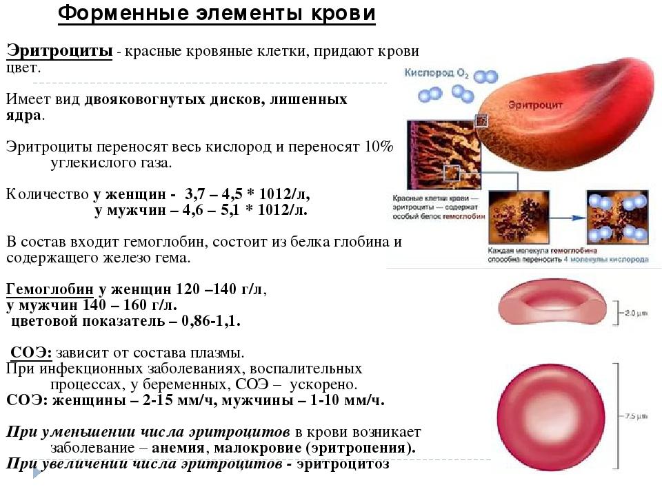 Повышенные эритроциты в крови у беременных причины 4