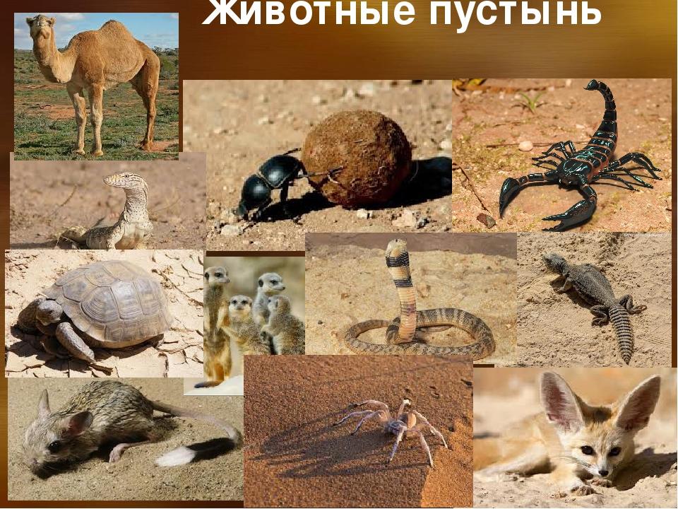Животные пустыни картинки и названия