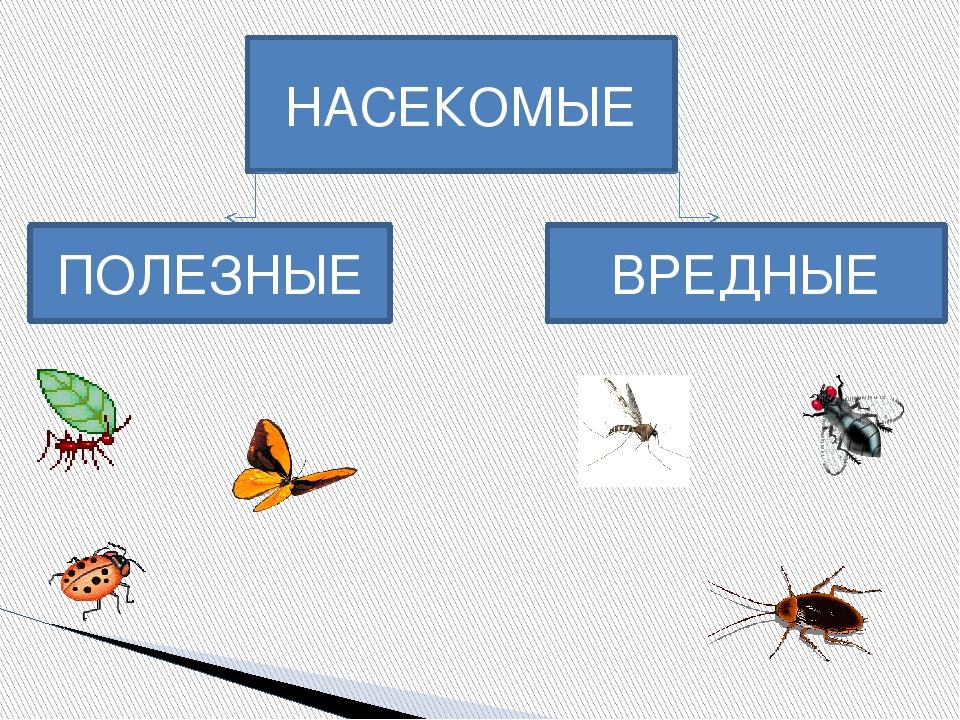 вредные и полезные насекомые с картинками желанию