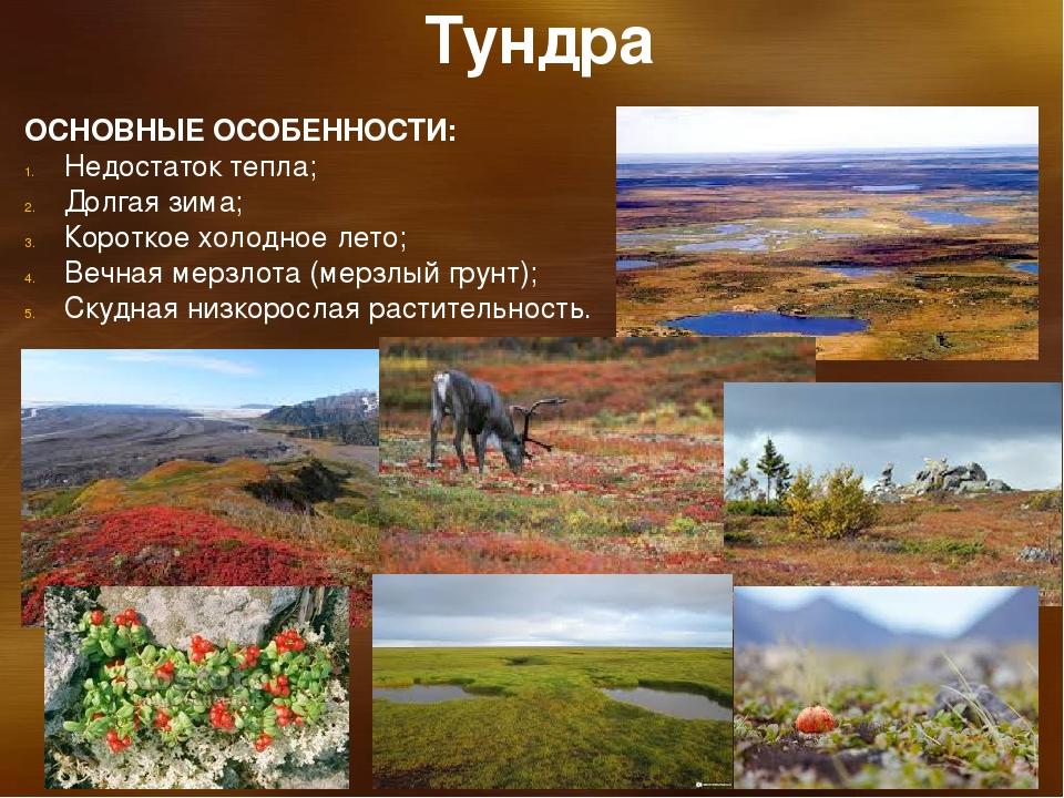 картинки природный комплекс тундры дали ему