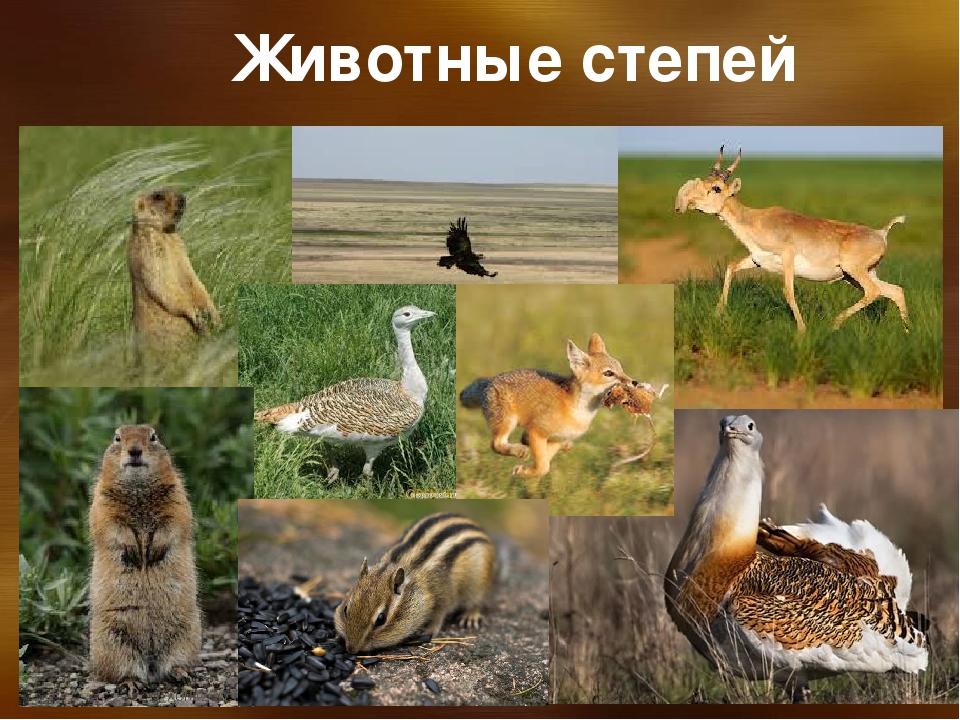 растения и животные степи с картинками что понадобится работе