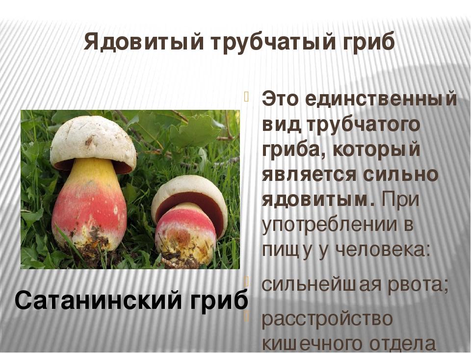 везде чистота трубчатые грибы ядовитые и съедобные фото влюбленности
