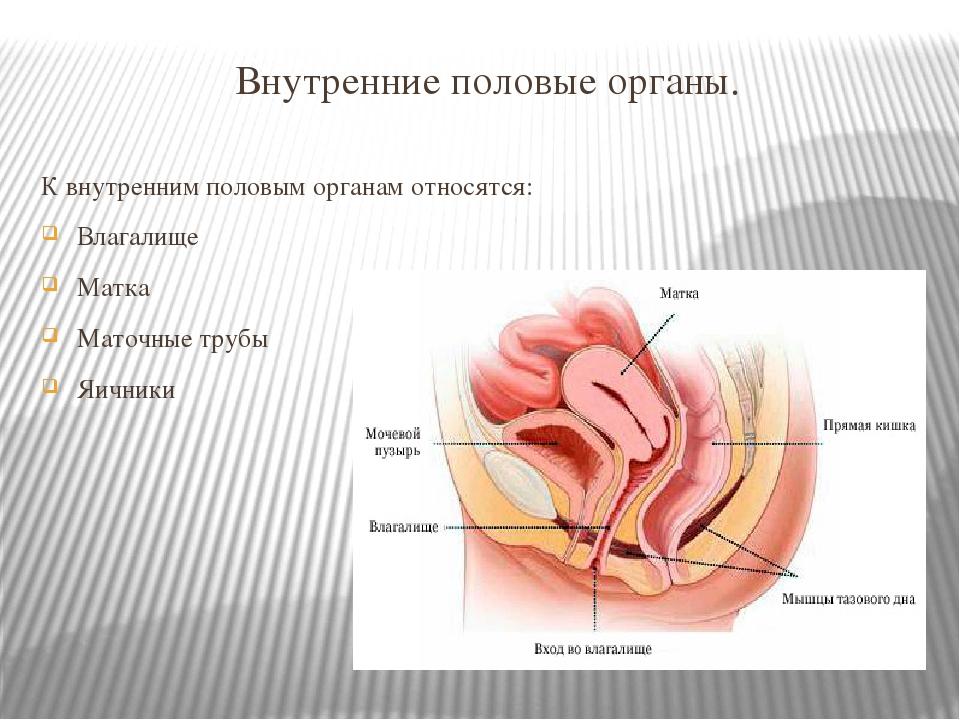 фото женских гениталий анала находитесь странице