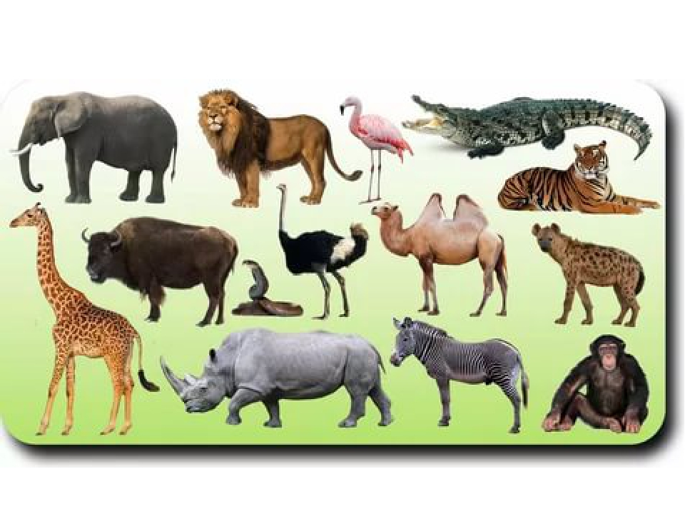 wild animals hindi essays Essay exam writing about school write term paper for me school essay on henry ford academy basketball about hobby essay time capsule essay about theatres junk food effects, what is the media essay uniforms essay guidelines examples versions what a research paper proposal hindi researching an essay kerala flood 2018 reading essay examples with.