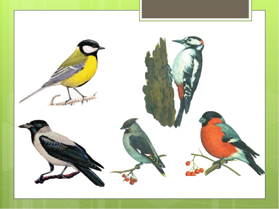 И распечатать картинки зимующие птицы, картинку