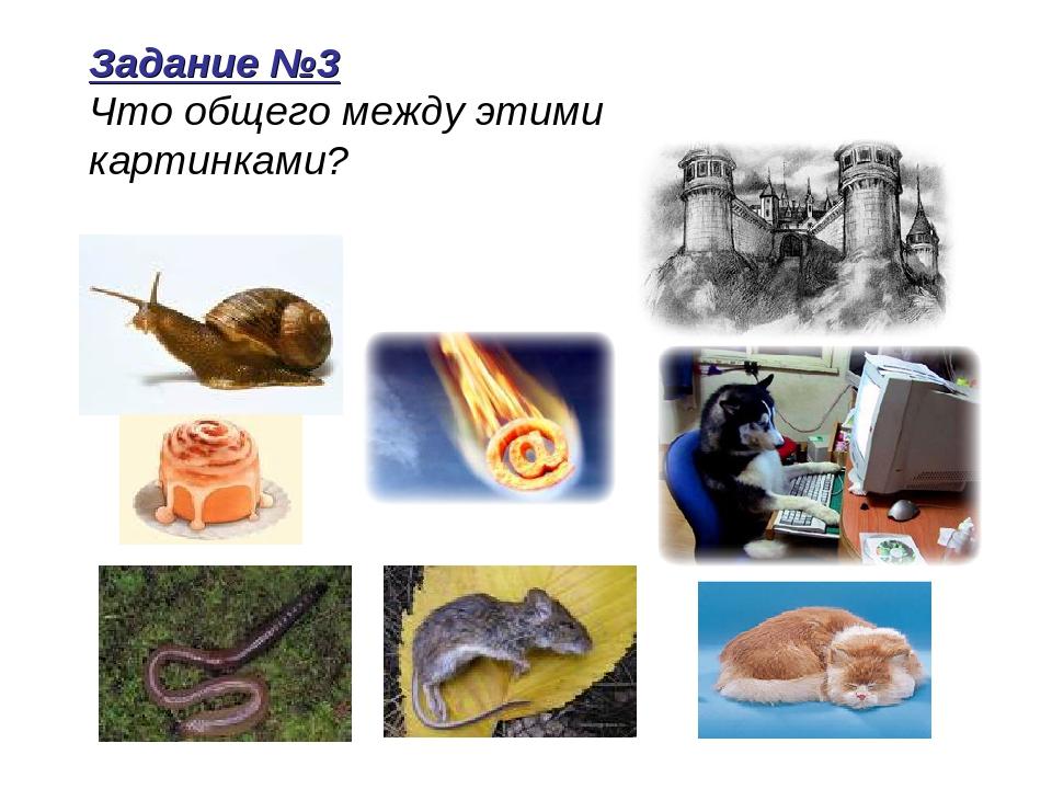 Что общее между картинками