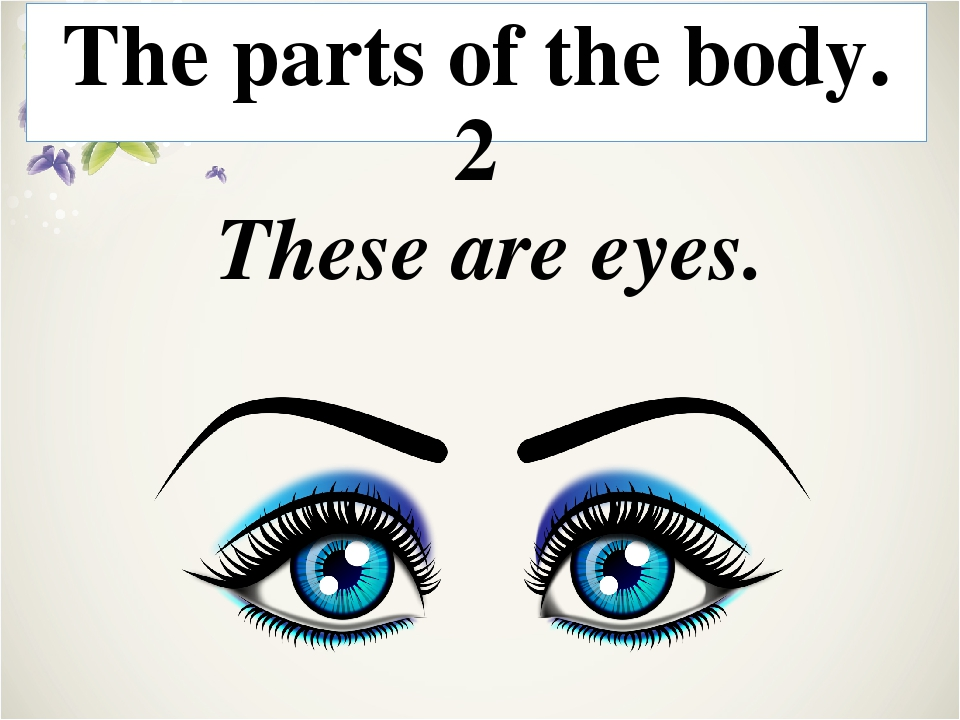 Head, toes, ears, body, legs, eyes, knee, arms, neck, mouth The parts of the...