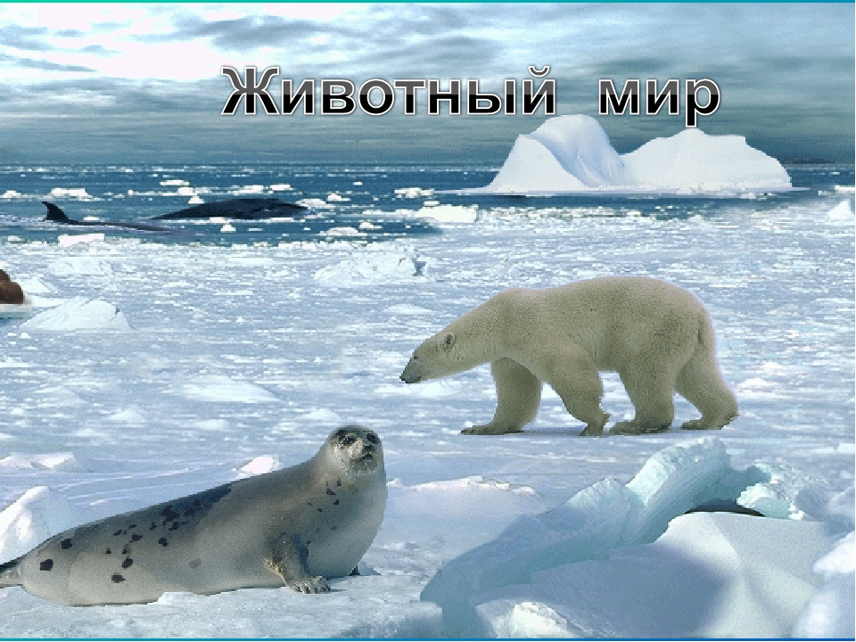 Картинки арктики с надписями