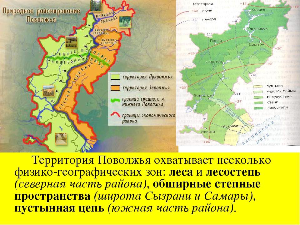 ТерриторияПоволжья охватывает несколько физико-географических зон: леса и л...