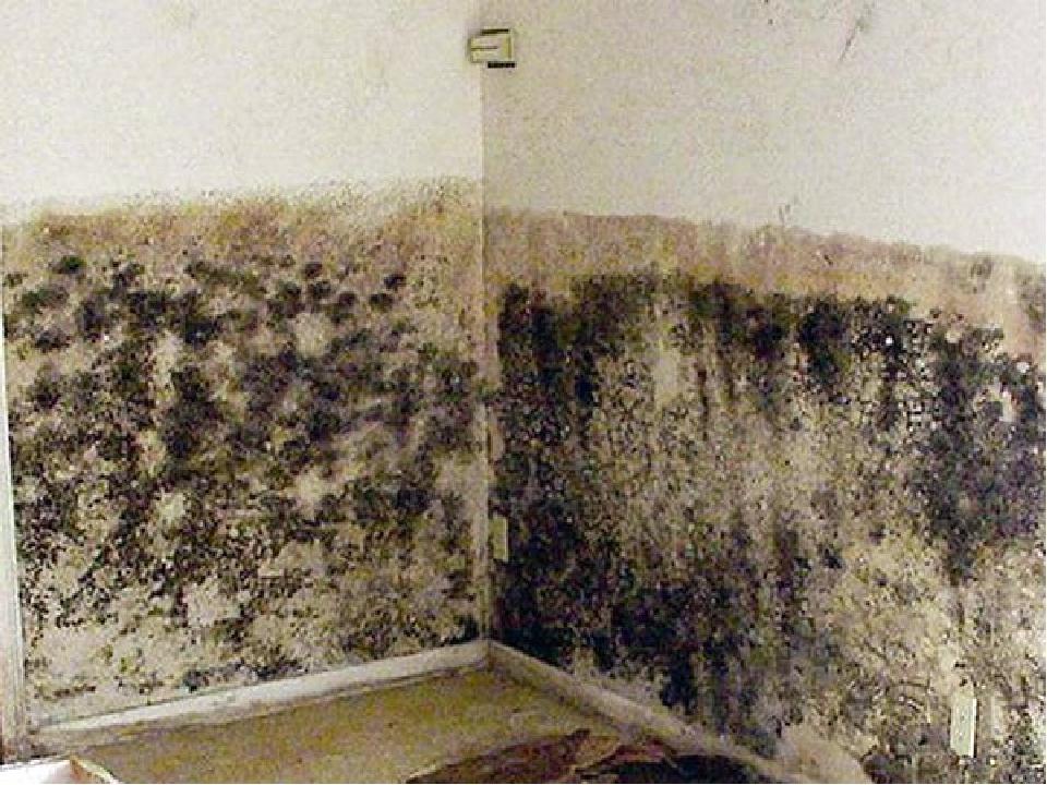 Как вывести грибок на стене в комнате и ванной: действенные .