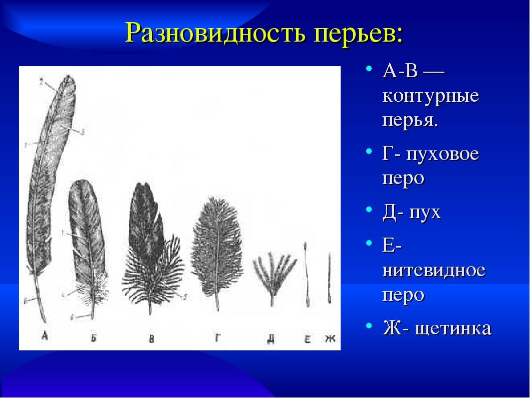 Типы перьев картинки