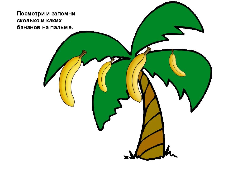 Пальма картинки для детей нарисованные, дню победы