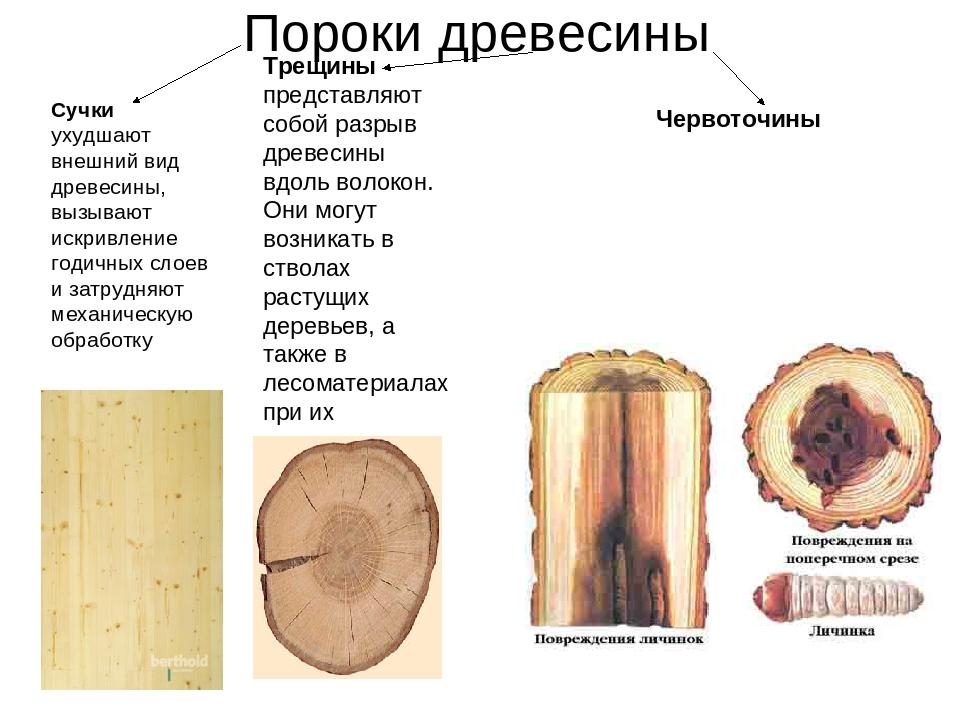 Сучки ухудшают внешний вид древесины, вызывают искривление годичных слоев и з...