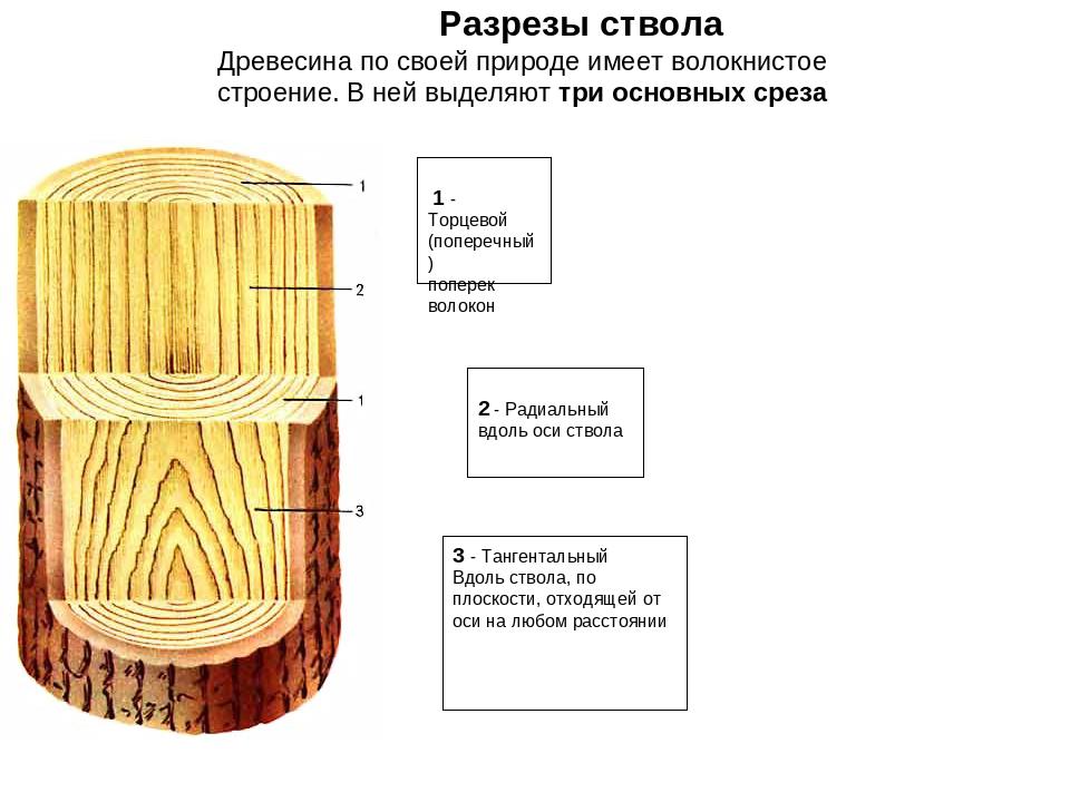 1 - Торцевой (поперечный) поперек волокон 2 - Радиальный вдоль оси ствола 3...
