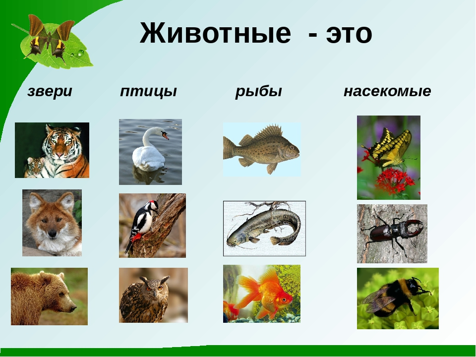 Название групп животных с картинками