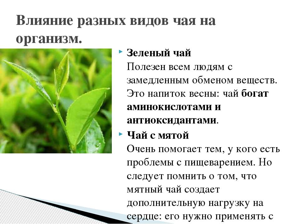 Зеленый чай Полезен всем людям с замедленным обменом веществ. Это напиток вес...