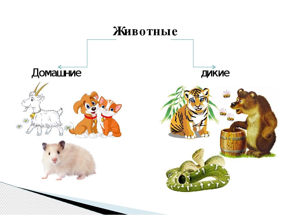 Животные Домашние дикие
