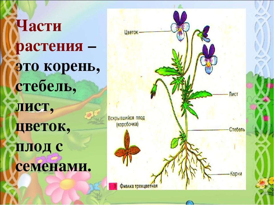 все части растения на картинке