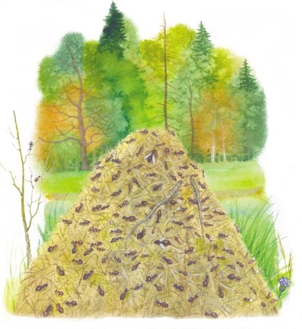 Картинки муравейника для детей