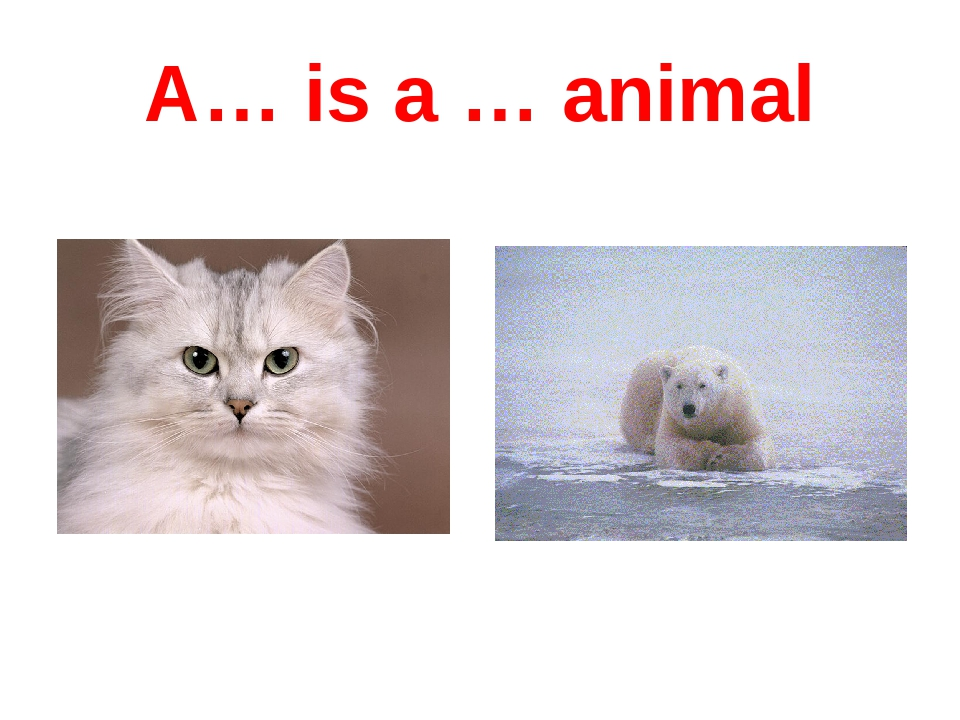A… is a … animal
