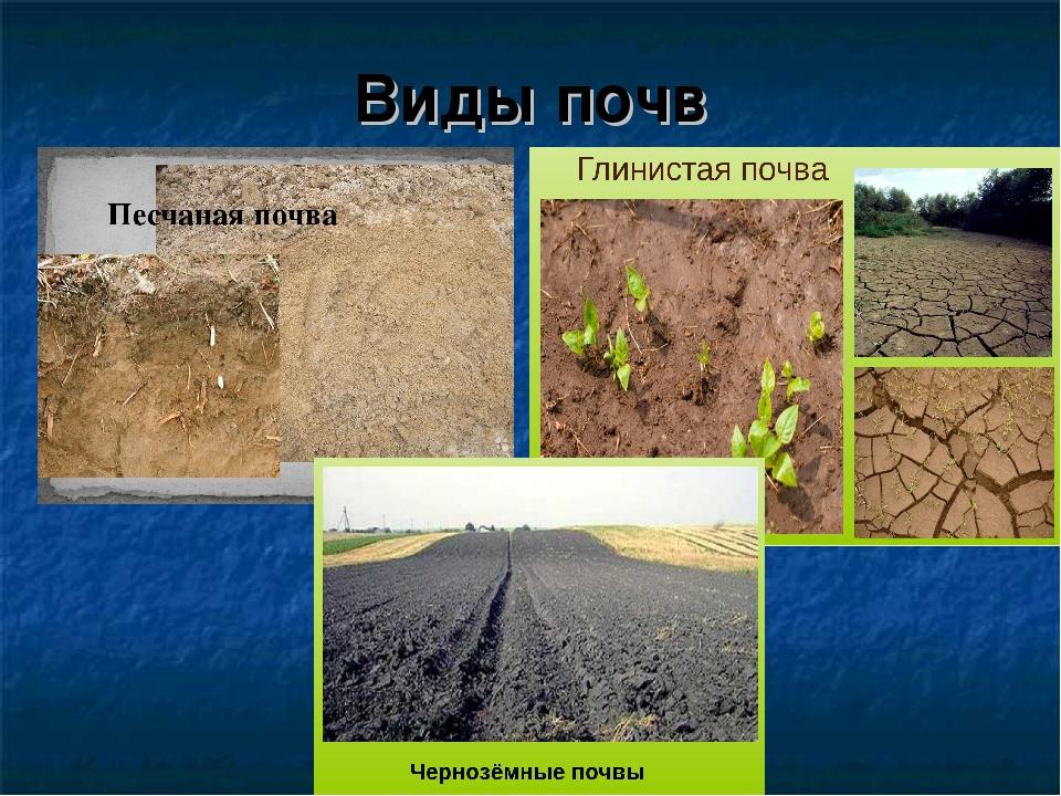 Особенности выращивания на песчаной почве 86
