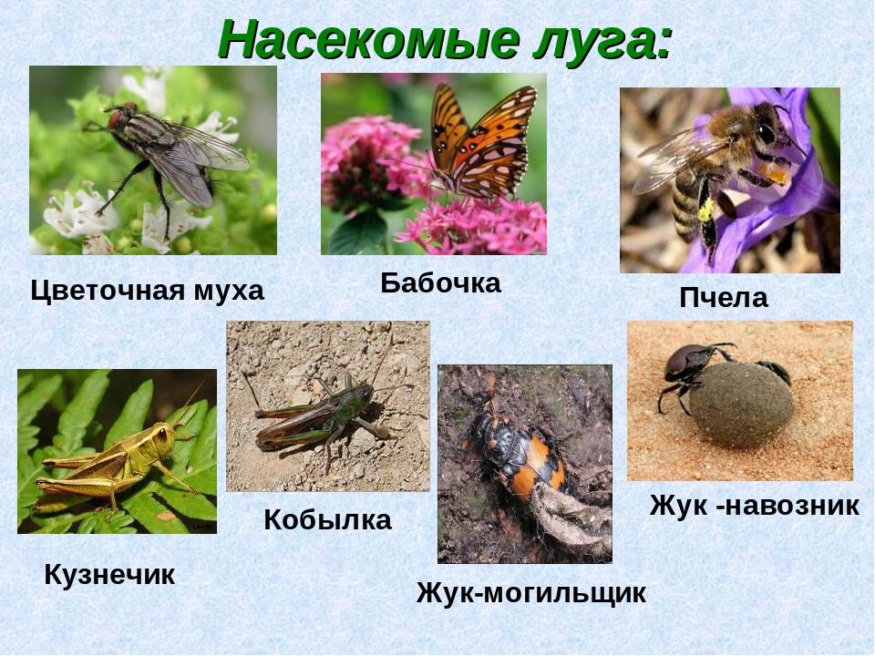 Достопримечательности башкирии фото с названиями что