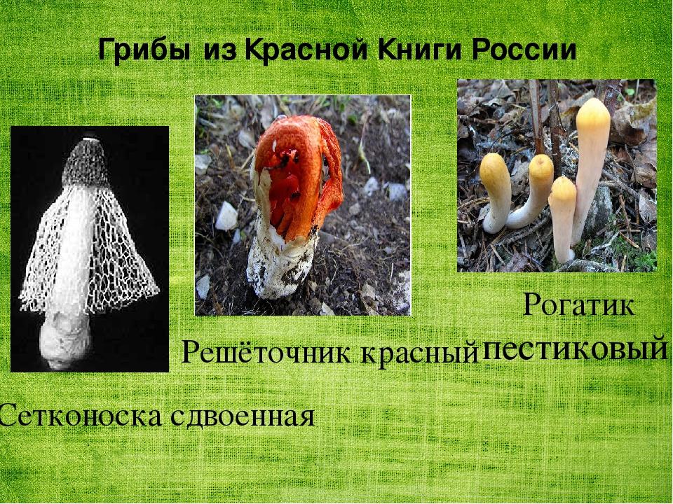 приносящая грибы из красной книги картинки невесты пионами розами