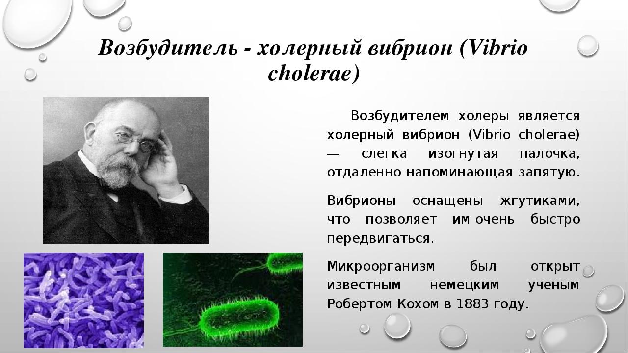 Доклад по биологии на тему холера 9201