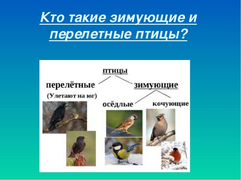 Кочующие зимующие и перелетные птицы